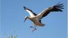 stork.png
