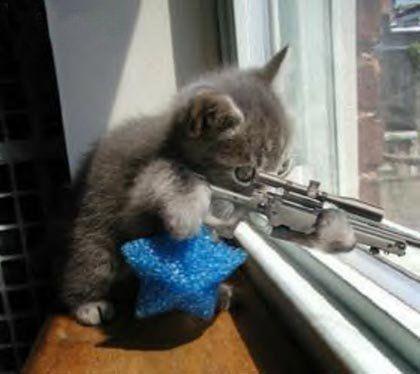 Kitty Sniper