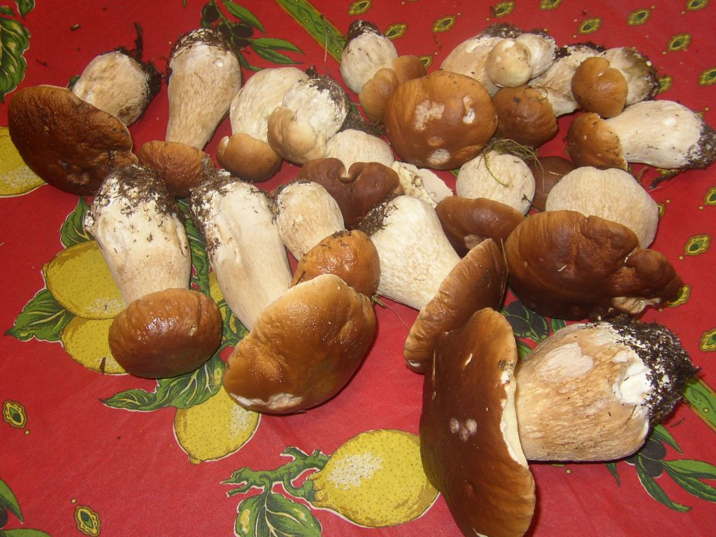 mushrooms kept in the dark and fed on sh@t