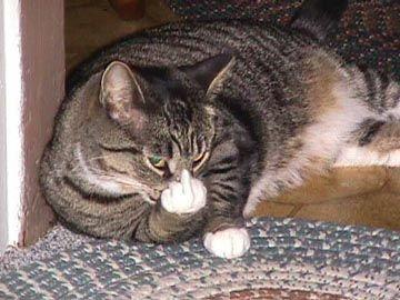 Cat with attitude.