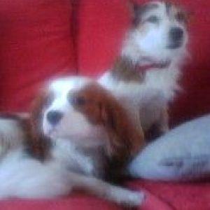 My Puppies!!